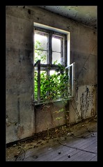 Nature is going to return its place (HDR) (Vespaline) Tags: old bw green abandoned window nature junk alt fenster natur sw grn hdr twine cirrus verlassen supershot ranke infinestyle theunforgettablepictures goldstaraward festunggrauerort