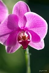 A forma clssica de ver. (pqueirozribeiro) Tags: brazil plant macro brasil pentaxsmc k10d pentaxk10d pentaxk110d smcpfa100mmf28 justpentax aficinonados pentaxsurhfr