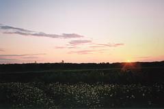 dandelionS' evening (an-s-ch) Tags: sunset film field landscape dandelions konicac35 charkow