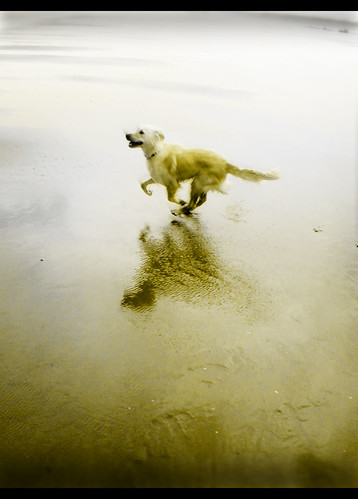 Run Doggy - Great photo