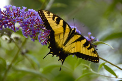 Butterfly Bokeh
