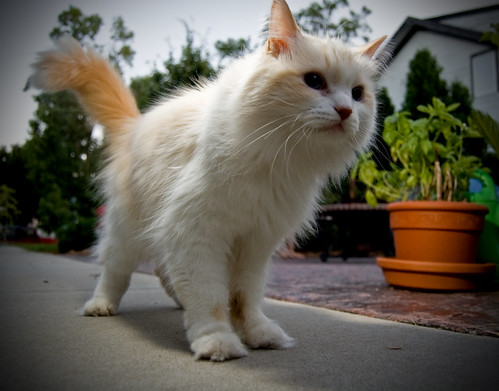 DeafCat on Patrol.