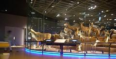 Tokyo 2008 - 國立科學博物館 - 第三階(1)