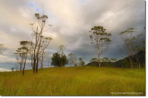Mesilau Grassland