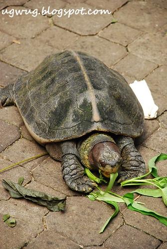 Feeding Tortoise
