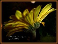 amarilla de espaldas