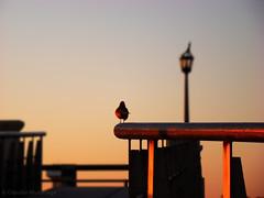 Sunrise/Amanecer - Costanera, Santa Fe, Argentina - 003 (Claudio.Ar) Tags: santafe color bird topf25 argentina sunrise sony amanecer pajaro ems dsc h9 cruzadas imagepoetry 35faves iloveargentina anawesomeshot aplusphoto ysplix theunforgettablepictures betterthangood theperfectphotographer artofthelight multimegashot cruzadasgold photoexel oraclex claudioar claudiomufarrege lesamisdupetitprince goldenmasterpiece gettyc