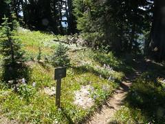 Shriner Peak camping area.