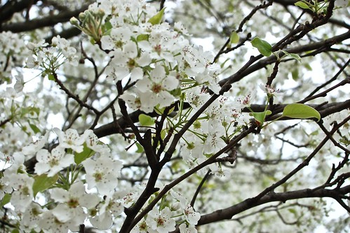 Tree blooming last year