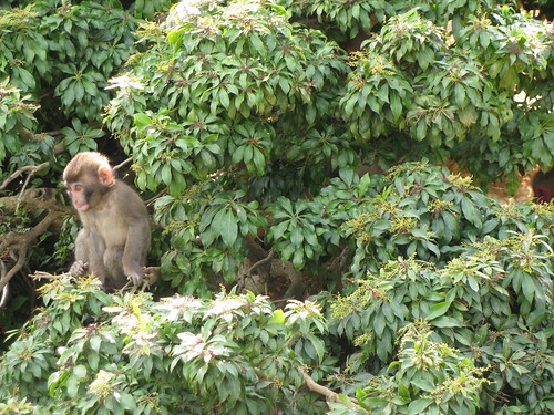 Baby monkey! [photo by Tania]