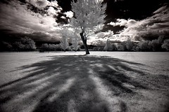 Skewed symmetry (infrared). (coulombic) Tags: shadow sky white black tree grass clouds canon utah glow foliage infrared 5d canon5d canoneos goshen canon1635mmf28l canoneos5d gabefarnsworth maxmaxcom canoninfrared utahinfrared coulombic utahir ldpllc photocontesttnc09