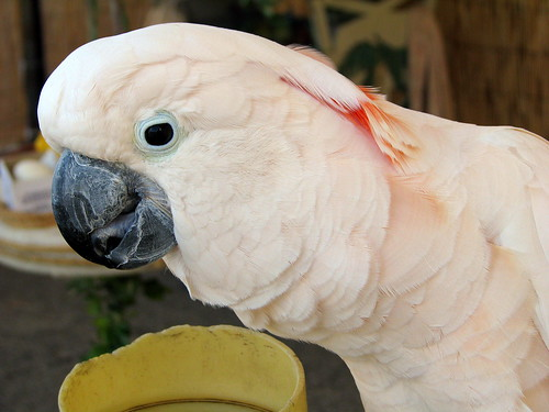 100 Things to see at the fair #26: Tropical Illusions bird