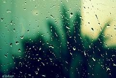 ماوقف دمعي .. نزل مثل المطر
