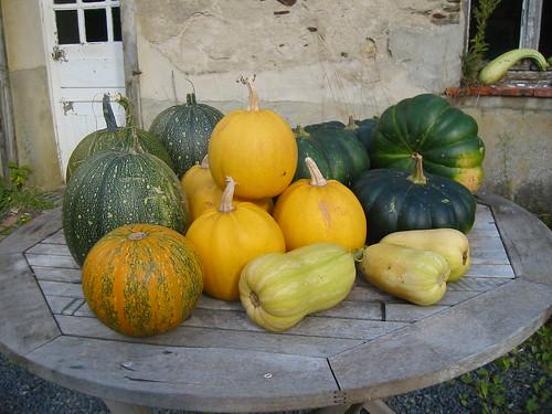 The Squash Harvest