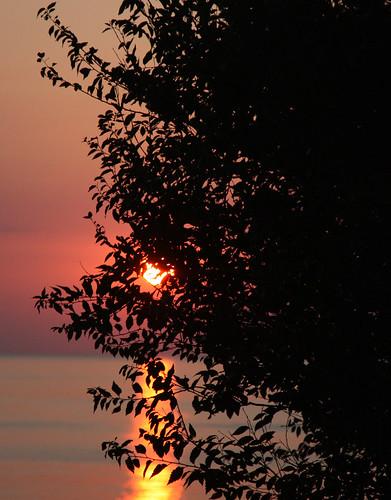 Il sole tra le foglie