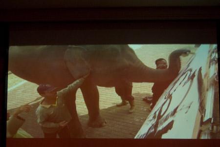 Elephant Art Trunk Show