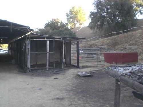 Liz Finder's horse stall