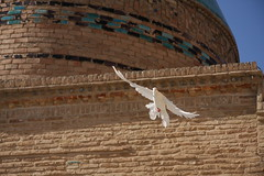 Fly out of history (hapal) Tags: white bird canon religious eos fly iran pigeon dove creativecommons iranian    bastam 40d   platinumheartaward  hamidnajafi