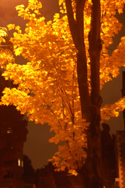 autumn_golden_tree_everett