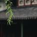 Suzhou_13