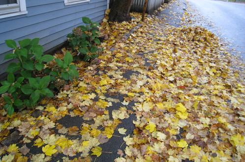 Leaves that fell last night