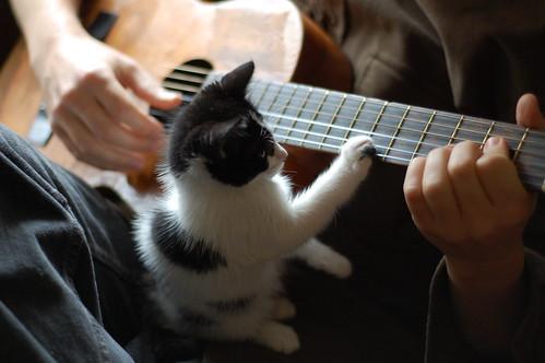 go cat, go