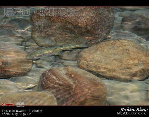 你拍攝的 20081115數位攝影_阿里山之旅259.jpg。