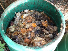 compost bin with bokashi added