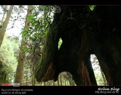 你拍攝的 20081116數位攝影_阿里山之旅071.jpg。