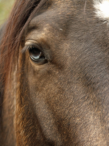 Horse Next Door Right Eye