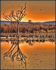 Bosque del Apache NWR (JoelDeluxe) Tags: blue sunset red orange newmexico color nature birds silhouette yellow photoshop landscape geese rojo aqua azure colores cranes bleu amarillo marsh nm migration joeldeluxe naranja hdr 202 bosquedelapache wetland sandhillcranes cacophony snowgeese wildife howitfeels