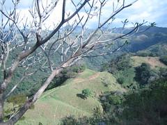 IMG_0653 (Zingiberaceae) Tags: spring costarica greenhills greenmountains lis5403sp09 barrenandtreecoveredhills trailsontheground grassdirtandtreesonhills farawayhills longdropdown monteverdearea