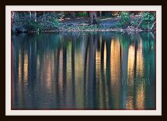 TOLLYMORE REFLECTIONS . (TT  FAUGHAN) Tags: ireland color tree green beautiful yellow forest reflections parks trunks