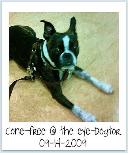 eye-dogter0914