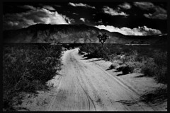 (heatherromney.com) Tags: california ca bw white black clouds u2 desert joshuatree anton joshuatrees redfilter corbijn