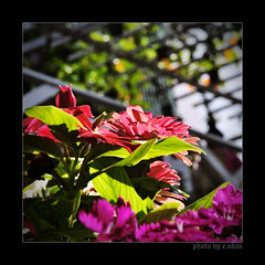 And times like these... (e.nhan) Tags: flowers light flower art nature closeup landscape spring colorful colours dof bokeh arts backlighting enhan