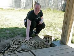 Flick with Cheetah cub (drplokta) Tags: geotagged holidays wildlife flick geo:lat=3397125535862882 geo:lon=1878618916255743