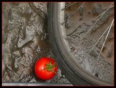 The INVISIBLE Tomato (! .  Angela Lobefaro . !) Tags: trip travel red vacation italy nature leaves rain bike bug tomato florence interestingness italia mud quality patterns rad tire explore cielo tired tuscany nubes firenze toscana 2008 frontpage rosso idyllic tomate pomodoro allrightsreserved ruota bicicletta invisibile fango explored i500 cesvi natuzzi mywinners eos400d outofluck anawesomeshot angiereal maxgreco angelalobefaro angelamlobefaro wwwcesviorg angelamarialobefaro massimilianogreco