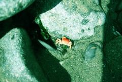 pequeo (clau_gatik) Tags: color azul foto playa verano contraste cangrejo narnajo