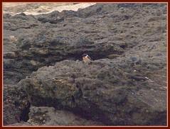 Os Ferreiros (anabelnikolai) Tags: galicia castro fotografos portodoson baroa ferreiros kddtecendoredes05