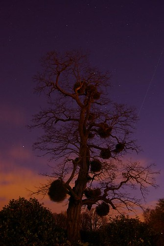 night shot of tree