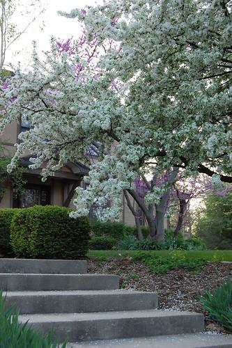 Flowering Trees at 1501