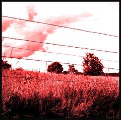 Prisonniers au paradis (Jessie Romaneix ) Tags: red sky color nikon solitude mood d70 country full prison ciel jail nothing paysage region campagne plein lanscape creuse vide limousin barbels humeur barbedwires lioreix clouleur
