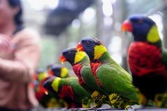 Kuala Lumpur Bird Park 2008 (9)