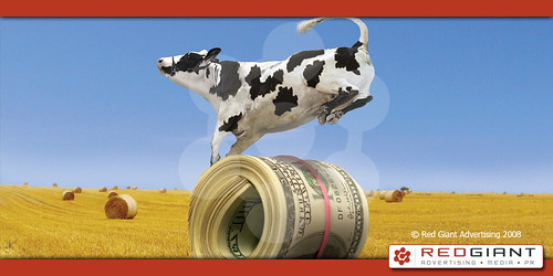 Clever Cow - ad with cow standing on a roll fo money - Photo by pixarman