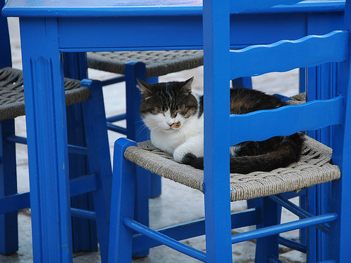 Sleepy Kitty, Hydra, Greece