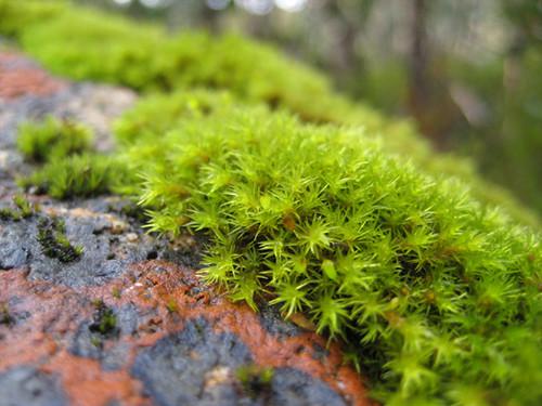 Mossy1
