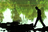 Walking On Reverse World! (alirezanajafian) Tags: reflection water silhouette walking nikon iran walk think thinking esfahan alireza isfahan مرد راه درخت سبز رود آب zayandehroud انعکاس zayanderood زاینده najafian alirezanajafian d80 zayandehrood علیرضا zayanderoud nikkor70300mmvr نجفیان ضدنور زایندهرود نیکون علیرضانجفیان راهرفتن دی80 سیلوئت رفلکشن