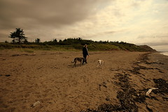 Sunday Morning (Number Six (bill lapp)) Tags: nikon newbrunswick beaches sundaymorning greyhounds saintjohn keepexploring