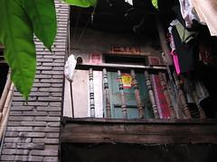 China-1364